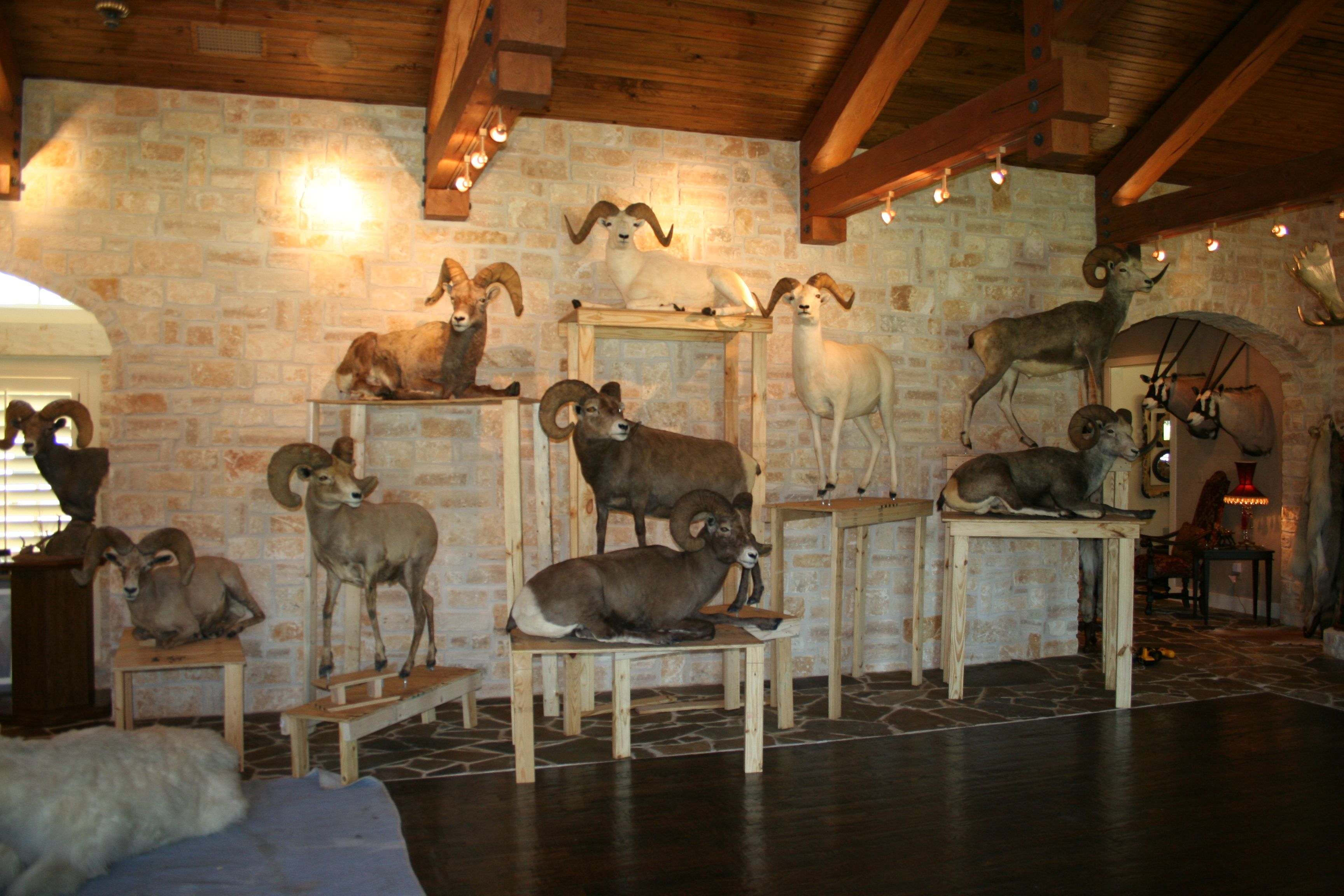 Texoma's QUALITY Home Builder does Trophy Rooms, too